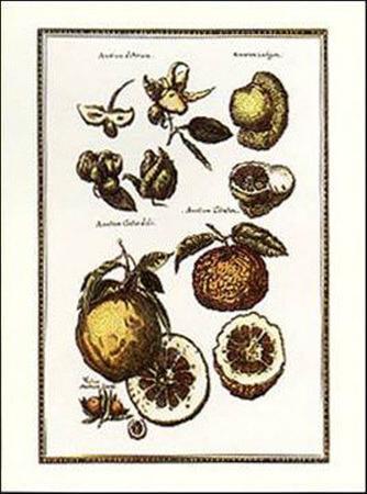Exotic Fruits II