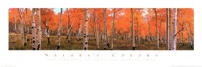 Nature's Colors, Autumn Trees