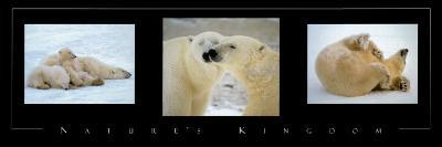 Nature's Kingdom, Polar Bears