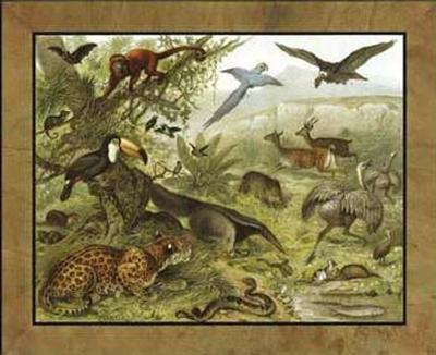 19th Cent. Zoological Studies I