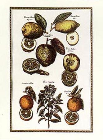 Exotic Fruits I