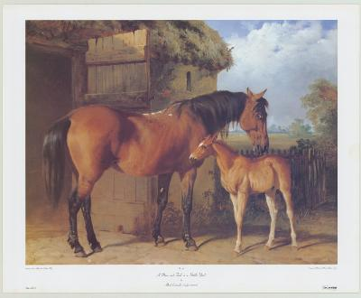Mare and Foal in a Stable Yard