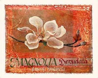 Canvas Magnolia I
