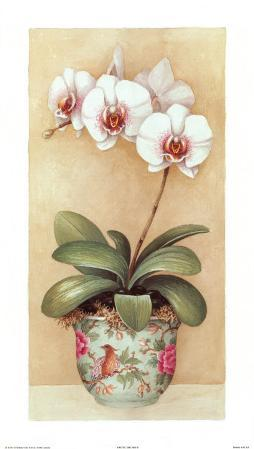 Exotic Orchids II