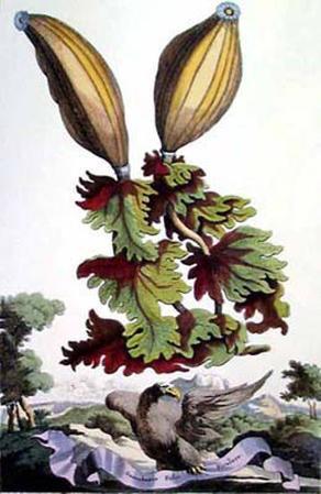 Exotic Botanical I