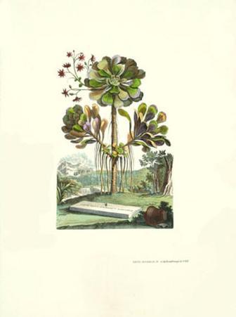 Exotic Botanical IV
