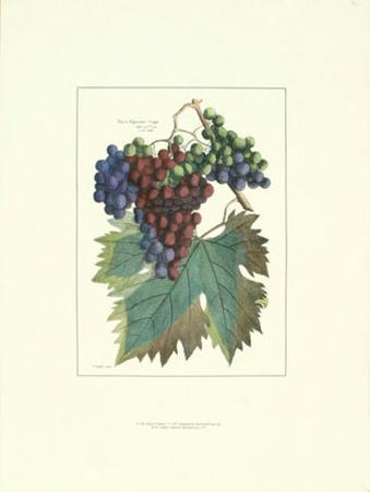 Detail of Grapes I