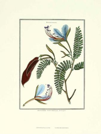 Flower: Heterostemon
