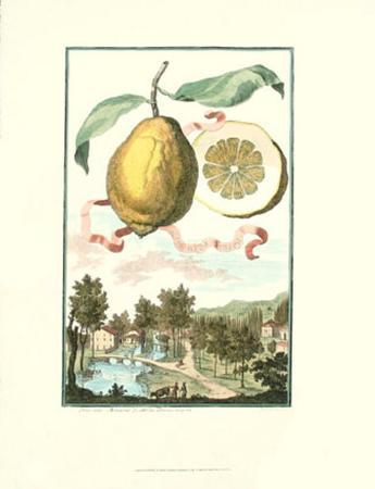 Lemon of Genova