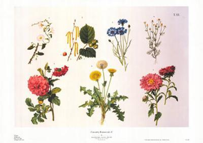 Country Botanicals II