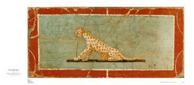 Frescoed Leopard