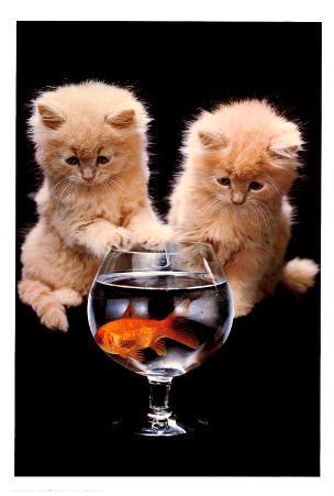Kittens and Goldfish