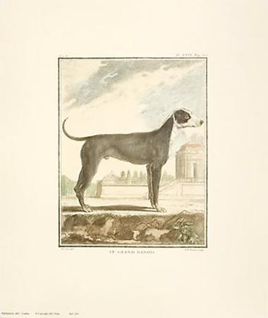 Classical Dogs