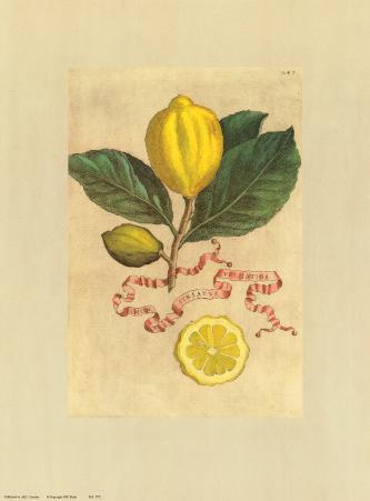 Baroque Lemons