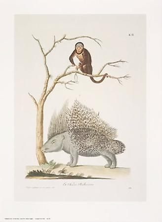 Porcupine and Monkey