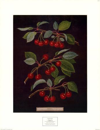 Cherries II