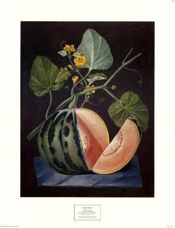 Polinac Melon