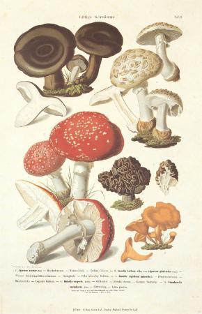 Fungi III