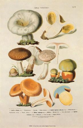 Fungi IV