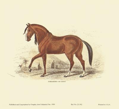 Horse, Paramero of Peru