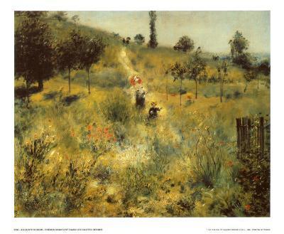 A Path Through the Long Grass