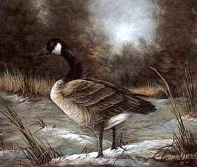 Canadian Goose Study