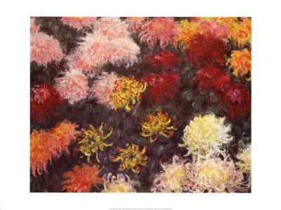 Massif de Chrysanthemes