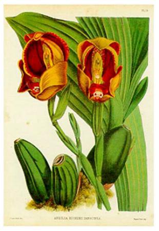 Orquideas II
