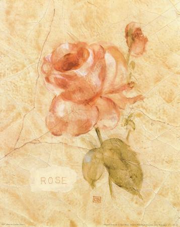 Rose on Cracked Linen