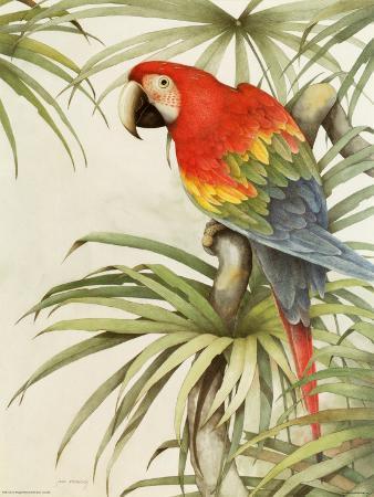 Green Winged Macaw II