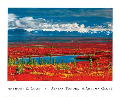 Alaska Tundra in Autumn Glory