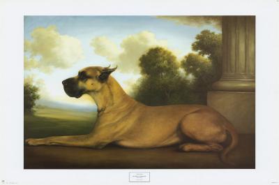 Recumbent Great Dane