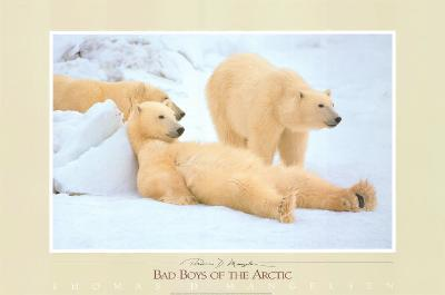 Bad Boys of the Arctic, Polar Bears