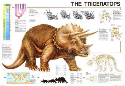 Dinosaurs Triceratops