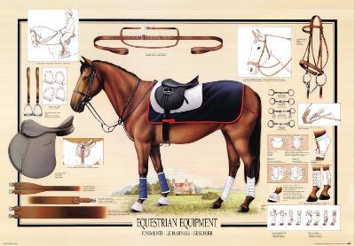 Horse Equestrian Equipment