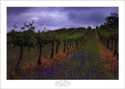 Wendouree Cellar Vineyards
