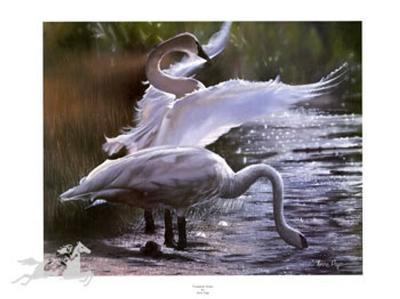 Trumpeter Swans (LE)