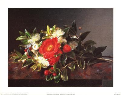 Camellia's Hypericum