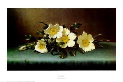 Four Cherokee Roses