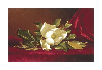 The Magnolia Flower