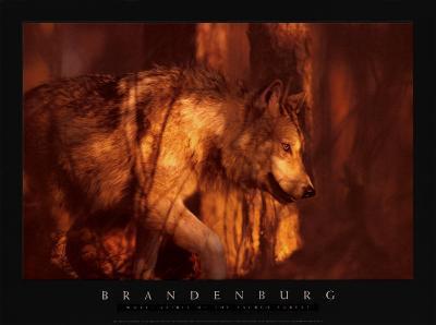 Wolf Spirit of the Sacred
