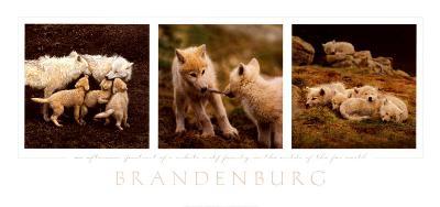 Wolf Family Portrait
