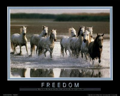 Freedom-Move to the Rhythm...