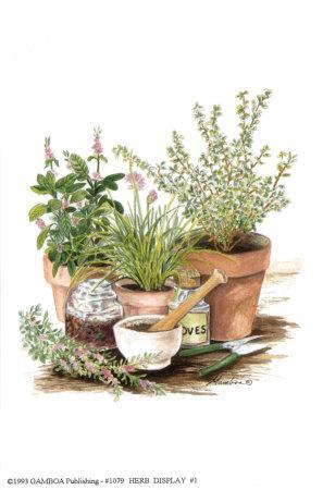 Herb Display 1