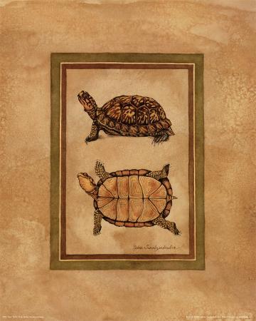 Box Turtle II