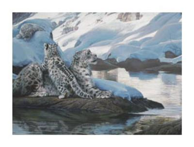 Watchful Eye, Snow Leopards