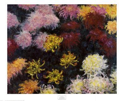 Chrysanthemum, 1897