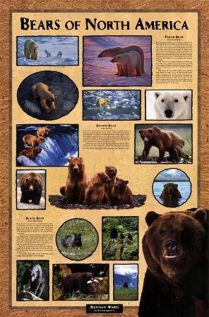 Bears of North America