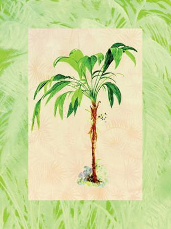 Palm Breezes II