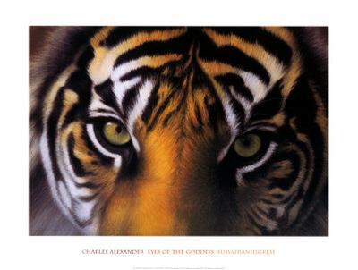 Eyes of the Goddess: Sumatran Tigress